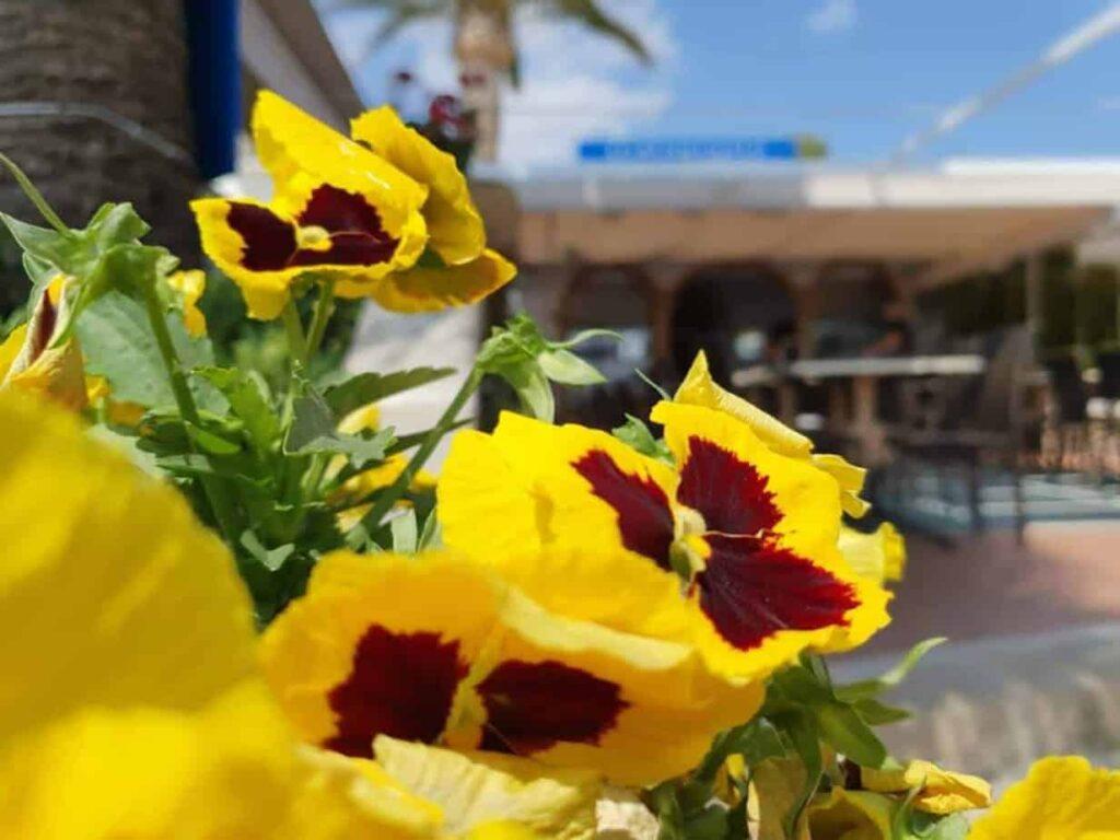 Flores restaurante en Jávea